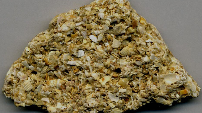 Coquina, The Rock That Saved S...